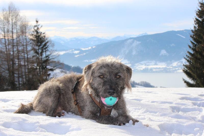 Bildertagebuch - Freddy (ehem. Django), verspielter Hund mit Flausen im Kopf - VERMITTELT! 35560890on