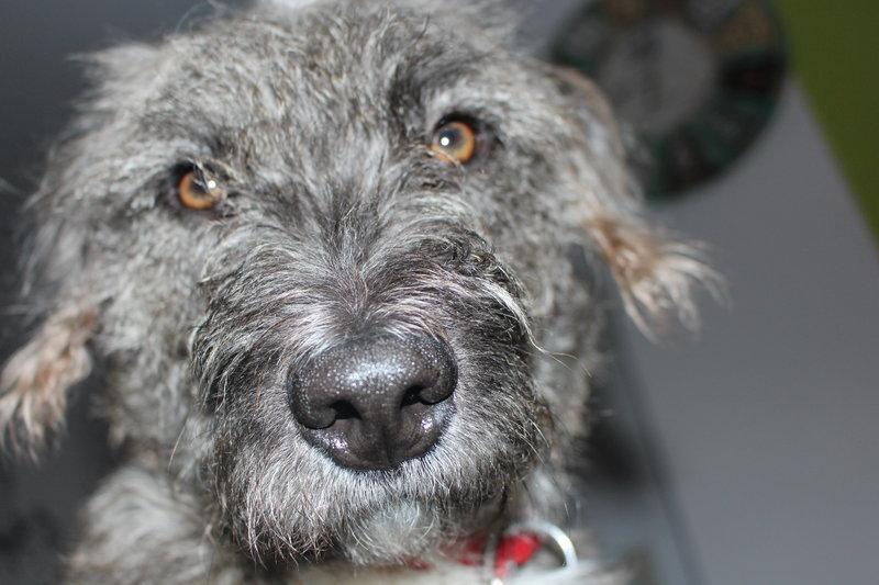 Bildertagebuch - Freddy (ehem. Django), verspielter Hund mit Flausen im Kopf - VERMITTELT! 35560897ap