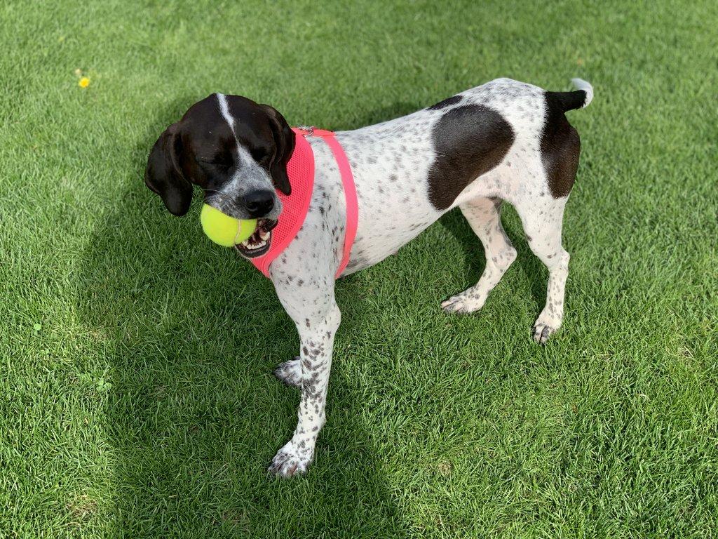 Bildertagebuch - Emily II möchte der perfekte Familienhund bei Ihnen werden VERMITTELT! 35604310ra