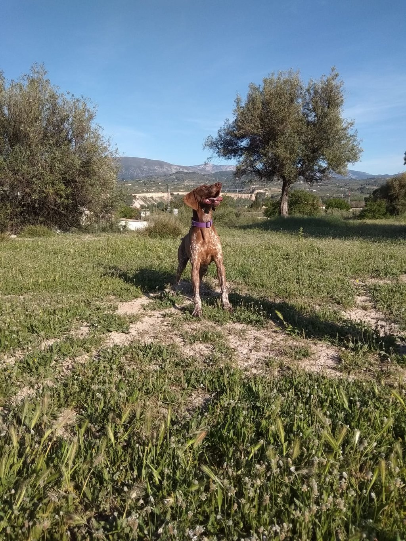 Bildertagebuch - Cosmo streunte über mehrere Tage in den Bergen umher, bis Tierschützer sich ihm annahmen 35636931vr