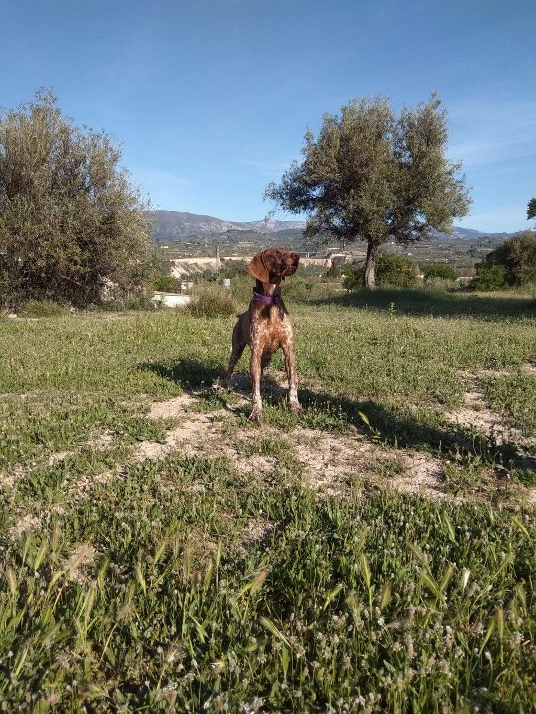 Bildertagebuch - Cosmo streunte über mehrere Tage in den Bergen umher, bis Tierschützer sich ihm annahmen 35636932wj