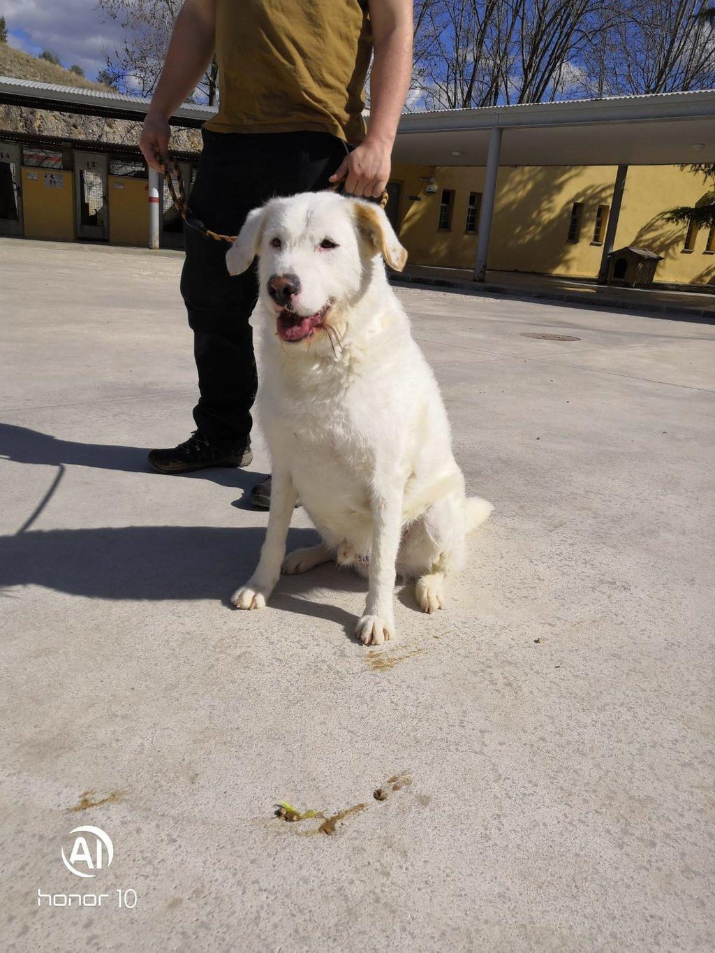 Bildertagebuch - THOR, kein Hund für Couchpotatoes - ÜBER ANDERE ORGA VERMITTELT - 35667759cj