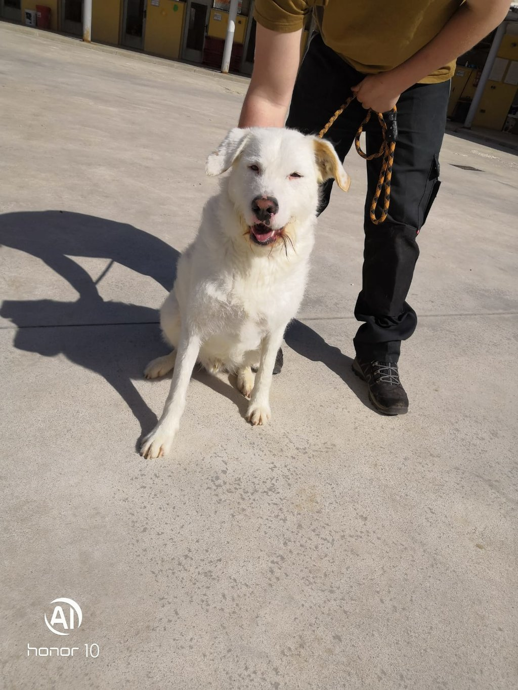 Bildertagebuch - THOR, kein Hund für Couchpotatoes - ÜBER ANDERE ORGA VERMITTELT - 35667763wt