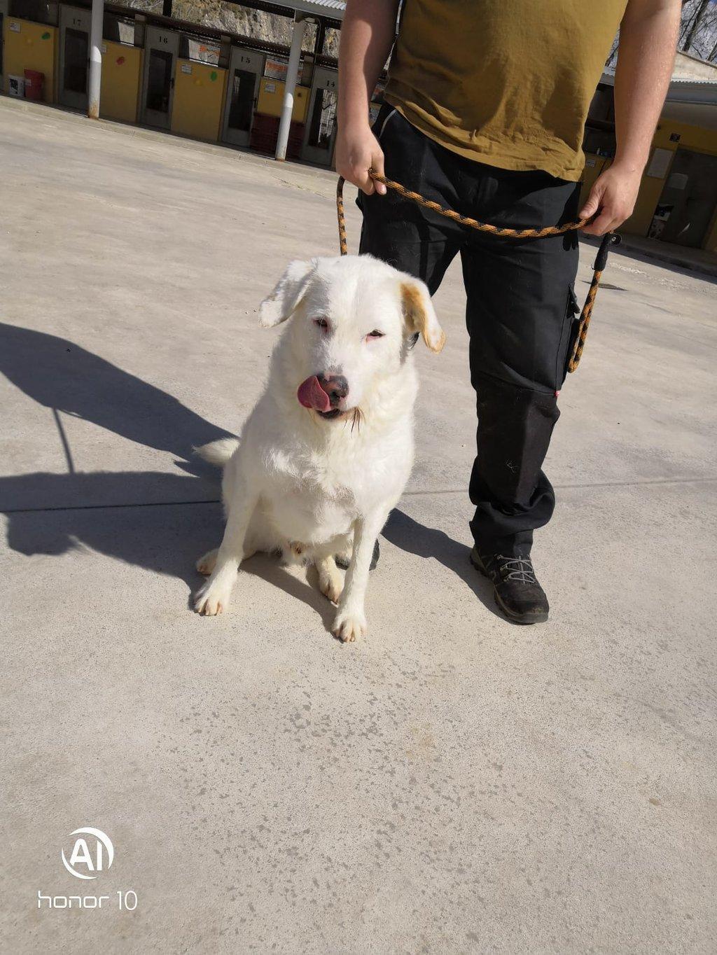 Bildertagebuch - THOR, kein Hund für Couchpotatoes - ÜBER ANDERE ORGA VERMITTELT - 35667764jf