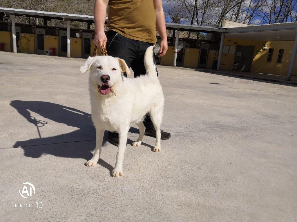 Bildertagebuch - THOR, kein Hund für Couchpotatoes - ÜBER ANDERE ORGA VERMITTELT - 35667767yy