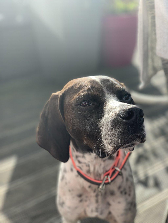 Bildertagebuch - Emily II möchte der perfekte Familienhund bei Ihnen werden VERMITTELT! 35685228yz