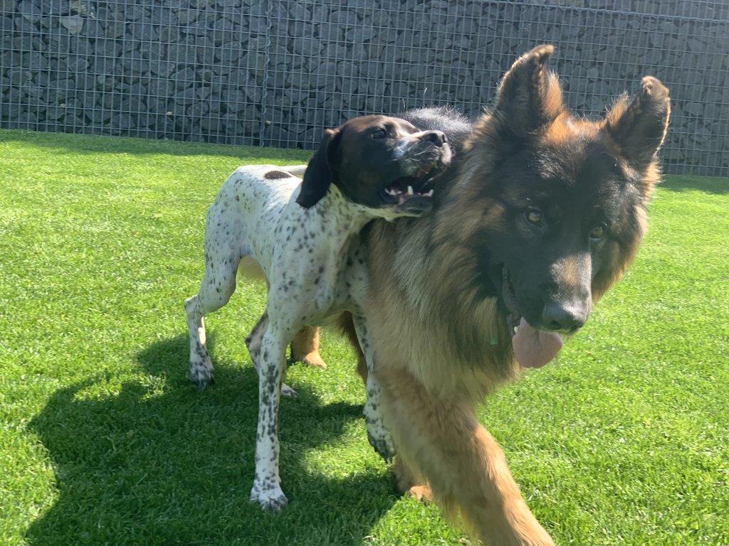 Bildertagebuch - Emily II möchte der perfekte Familienhund bei Ihnen werden VERMITTELT! 35685235mt