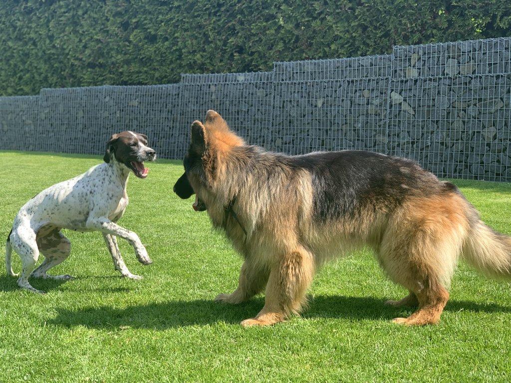 Bildertagebuch - Emily II möchte der perfekte Familienhund bei Ihnen werden VERMITTELT! 35685239gk