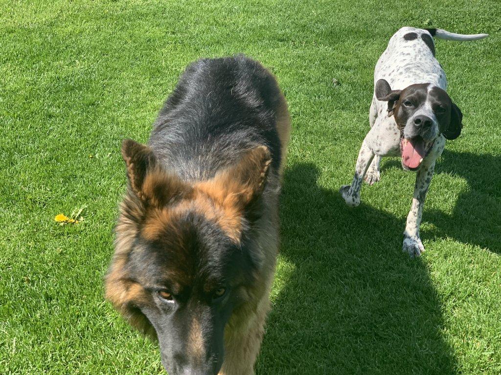 Bildertagebuch - Emily II möchte der perfekte Familienhund bei Ihnen werden VERMITTELT! 35685243rl