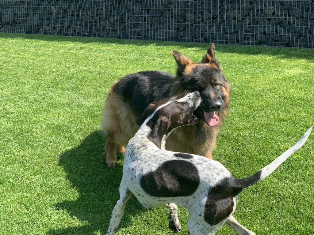 Bildertagebuch - Emily II möchte der perfekte Familienhund bei Ihnen werden VERMITTELT! 35685245zk