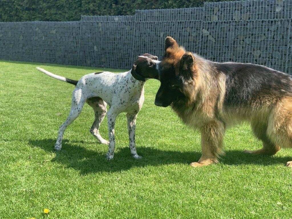 Bildertagebuch - Emily II möchte der perfekte Familienhund bei Ihnen werden VERMITTELT! 35685246dl