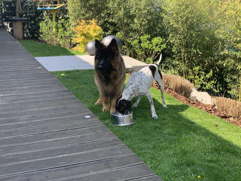 Bildertagebuch - Emily II möchte der perfekte Familienhund bei Ihnen werden VERMITTELT! 35685247lz