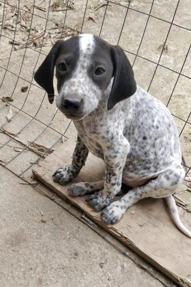 Bildertagebuch - ARIANNA, kleines Hundemädchen sucht Zuhause für immer... 35711198mg