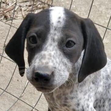 Bildertagebuch - ARIANNA, kleines Hundemädchen sucht Zuhause für immer... 35711203rn