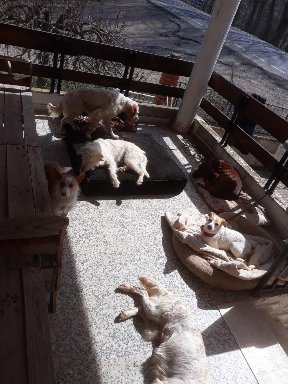 Bildertagebuch - TXURI, kleine Terrierpersönlichkeit - VERMITTELT - 35741425ee