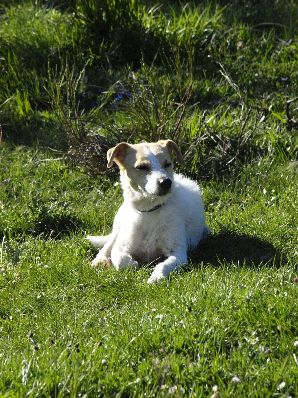 Bildertagebuch - TXURI, kleine Terrierpersönlichkeit - VERMITTELT - 35741430yb