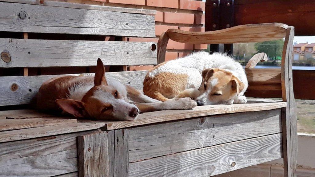 Bildertagebuch - TXURI, kleine Terrierpersönlichkeit - VERMITTELT - 35741438uf