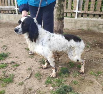 Bildertagebuch - Sir Cedric möchte nach 2 Jahren Zwingerleben gerne endlich Hund sein dürfen - VERMITTELT - 35782864fj