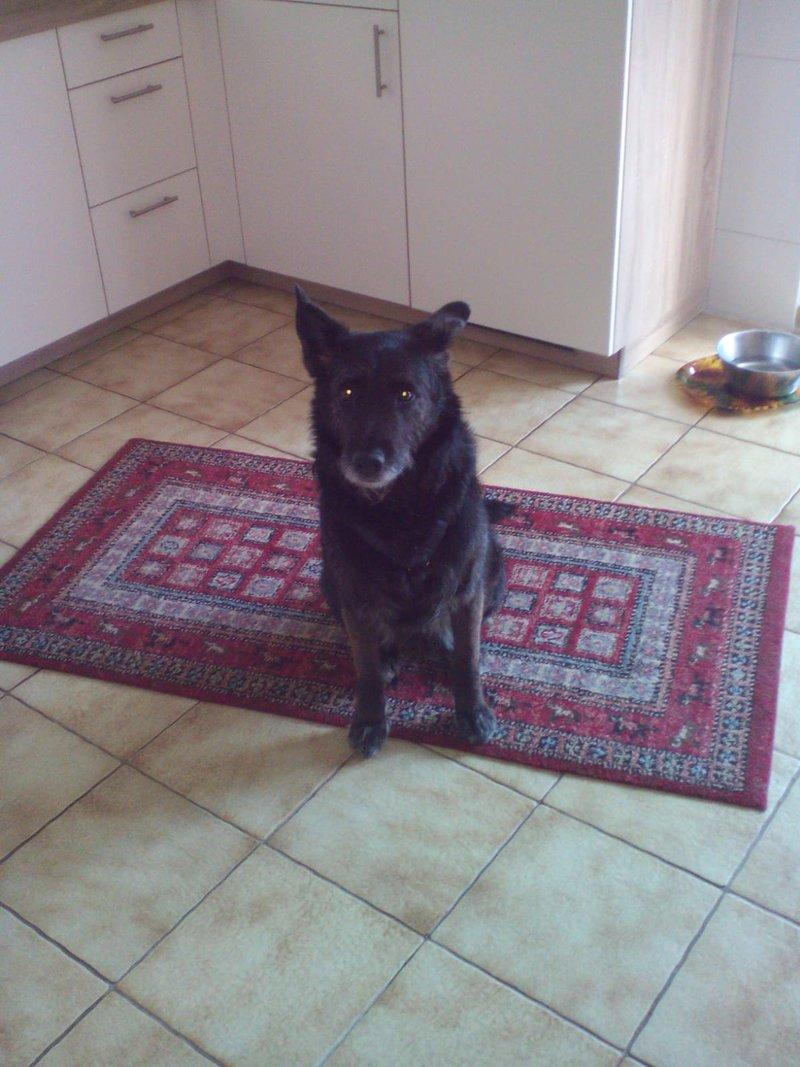 Bildertagebuch - Kira, ein absoluter Traumhund sucht ein Für-immer-Zuhause... VERMITTELT 35865612zz