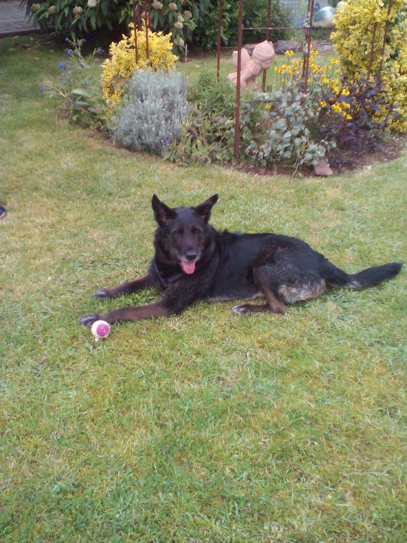 Bildertagebuch - Kira, ein absoluter Traumhund sucht ein Für-immer-Zuhause... VERMITTELT 35865614wm