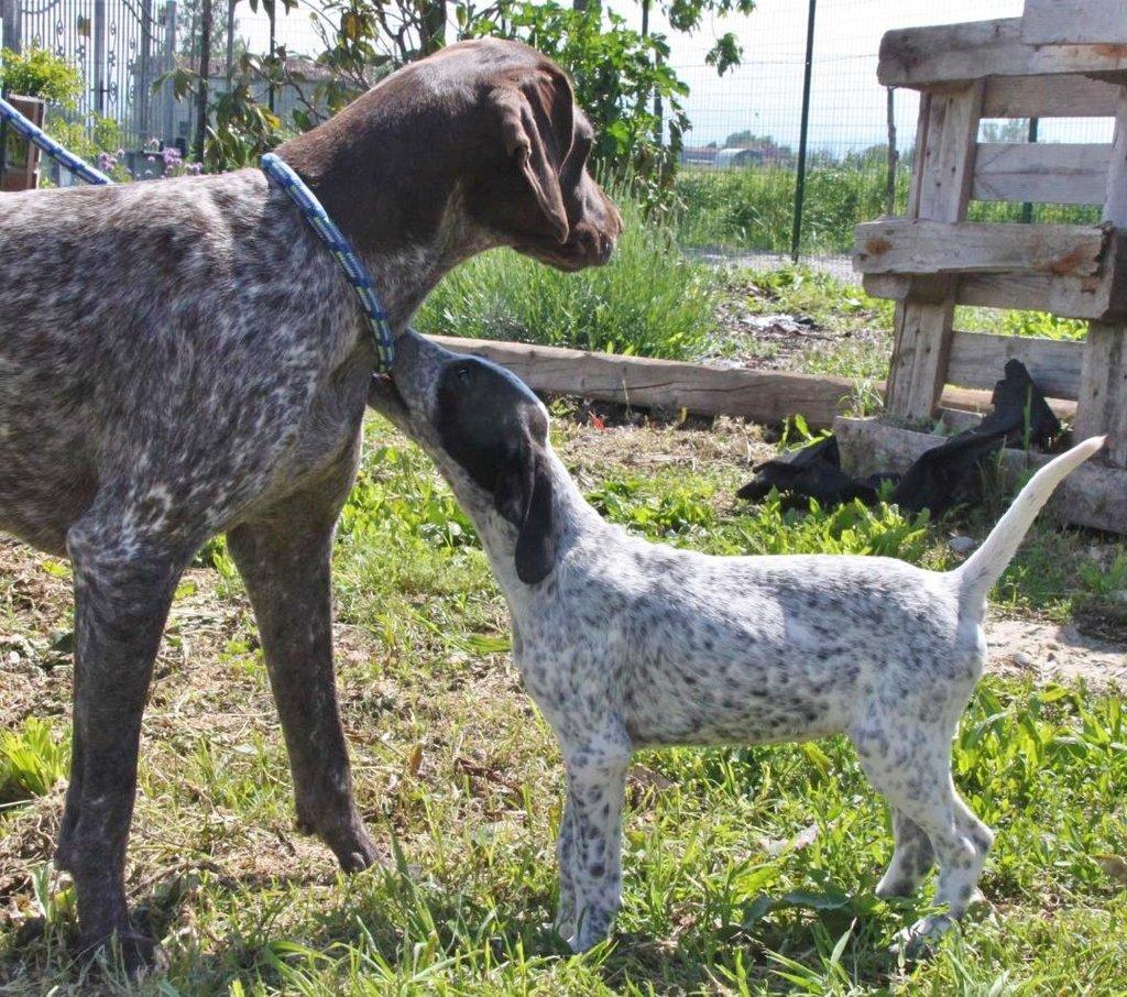 Bildertagebuch - ARIANNA, kleines Hundemädchen sucht Zuhause für immer - VERMITTELT - 36005201dr