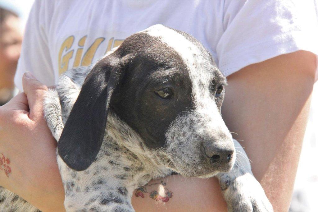 Bildertagebuch - ARIANNA, kleines Hundemädchen sucht Zuhause für immer - VERMITTELT - 36005202cq