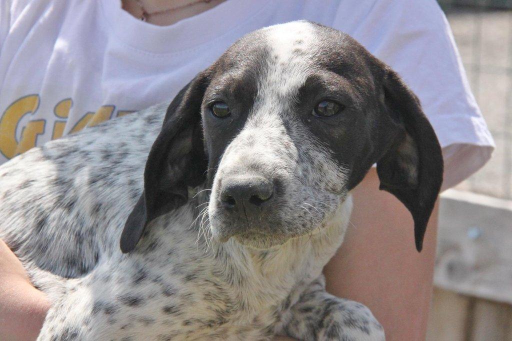 Bildertagebuch - ARIANNA, kleines Hundemädchen sucht Zuhause für immer... 36005203mg