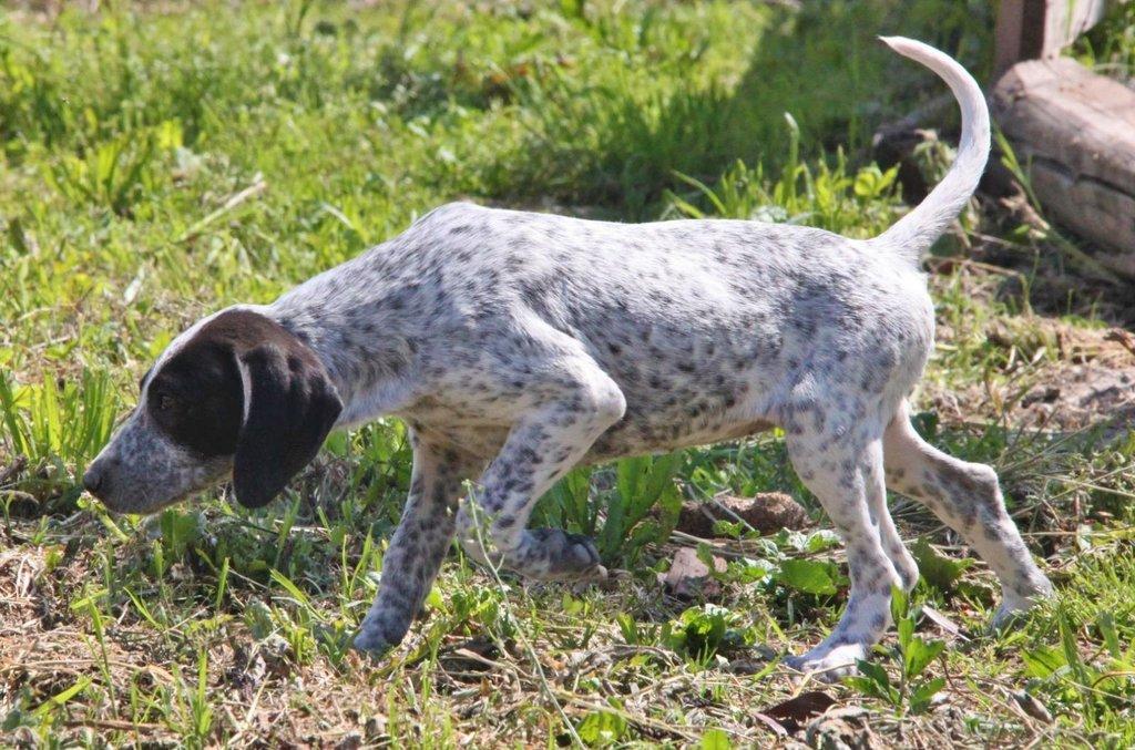 Bildertagebuch - ARIANNA, kleines Hundemädchen sucht Zuhause für immer... 36005205qq