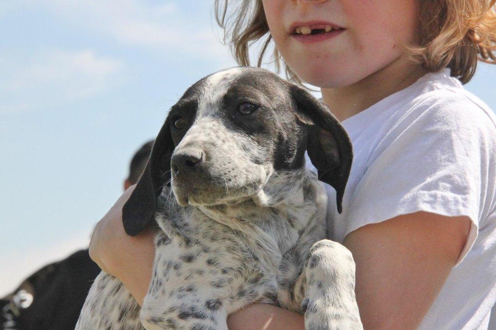 Bildertagebuch - ARIANNA, kleines Hundemädchen sucht Zuhause für immer... 36005206tu
