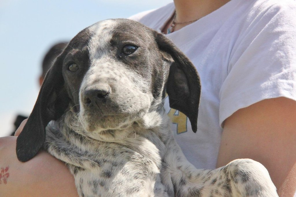 Bildertagebuch - ARIANNA, kleines Hundemädchen sucht Zuhause für immer... 36005208wg
