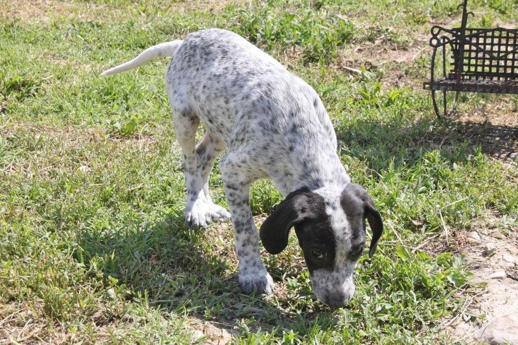 Bildertagebuch - ARIANNA, kleines Hundemädchen sucht Zuhause für immer - VERMITTELT - 36005212ue