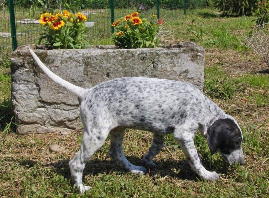 Bildertagebuch - ARIANNA, kleines Hundemädchen sucht Zuhause für immer... 36005214td