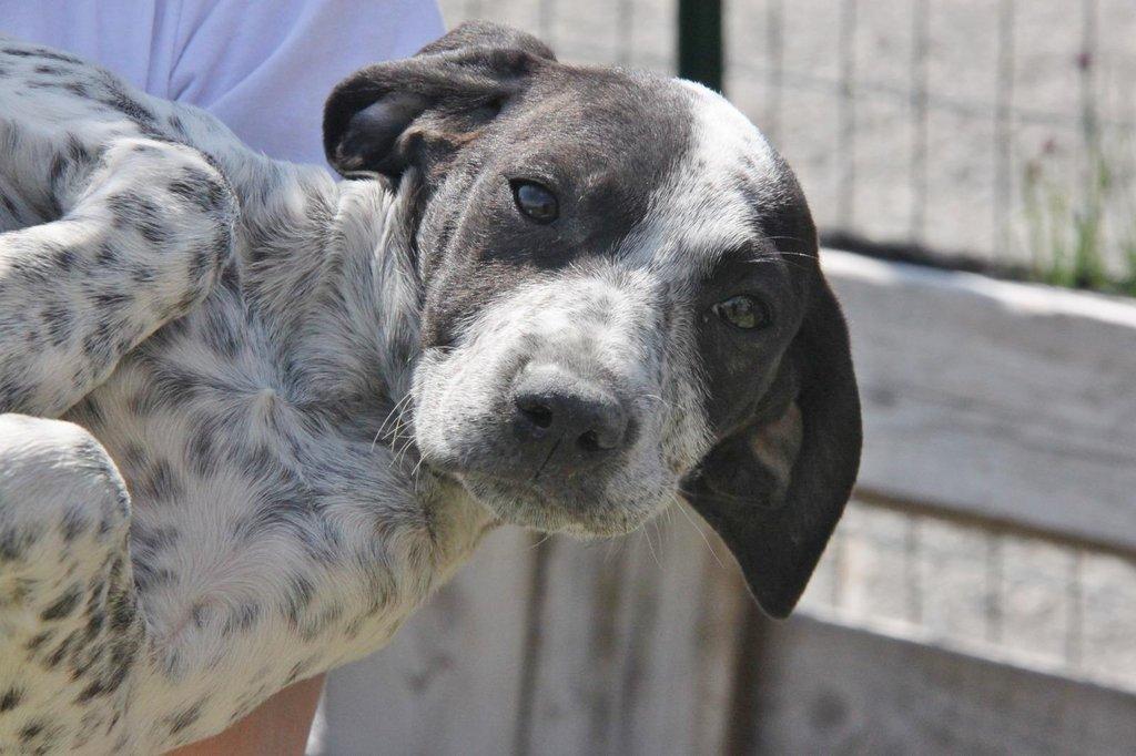 Bildertagebuch - ARIANNA, kleines Hundemädchen sucht Zuhause für immer - VERMITTELT - 36005216ef