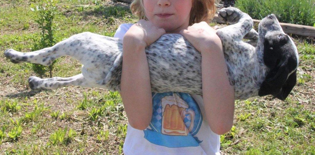 Bildertagebuch - ARIANNA, kleines Hundemädchen sucht Zuhause für immer... 36005217tg