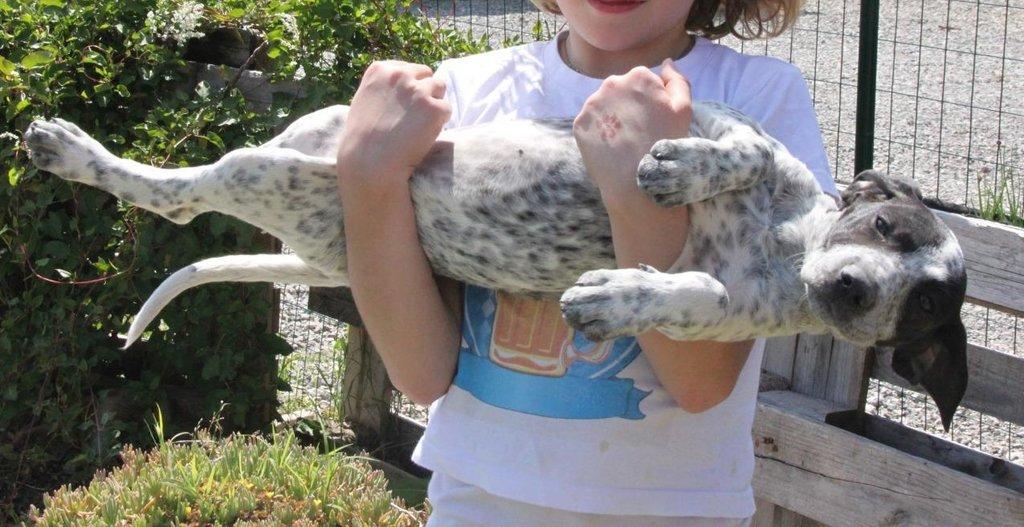 Bildertagebuch - ARIANNA, kleines Hundemädchen sucht Zuhause für immer... 36005218eu