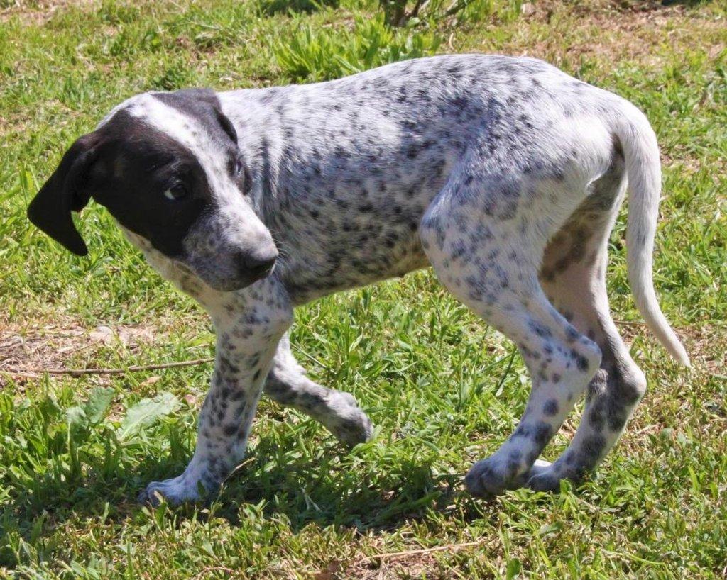 Bildertagebuch - ARIANNA, kleines Hundemädchen sucht Zuhause für immer... 36005219af