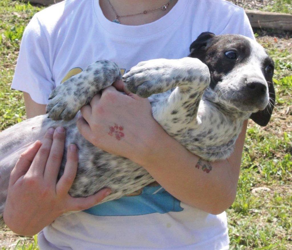 Bildertagebuch - ARIANNA, kleines Hundemädchen sucht Zuhause für immer... 36005220dq