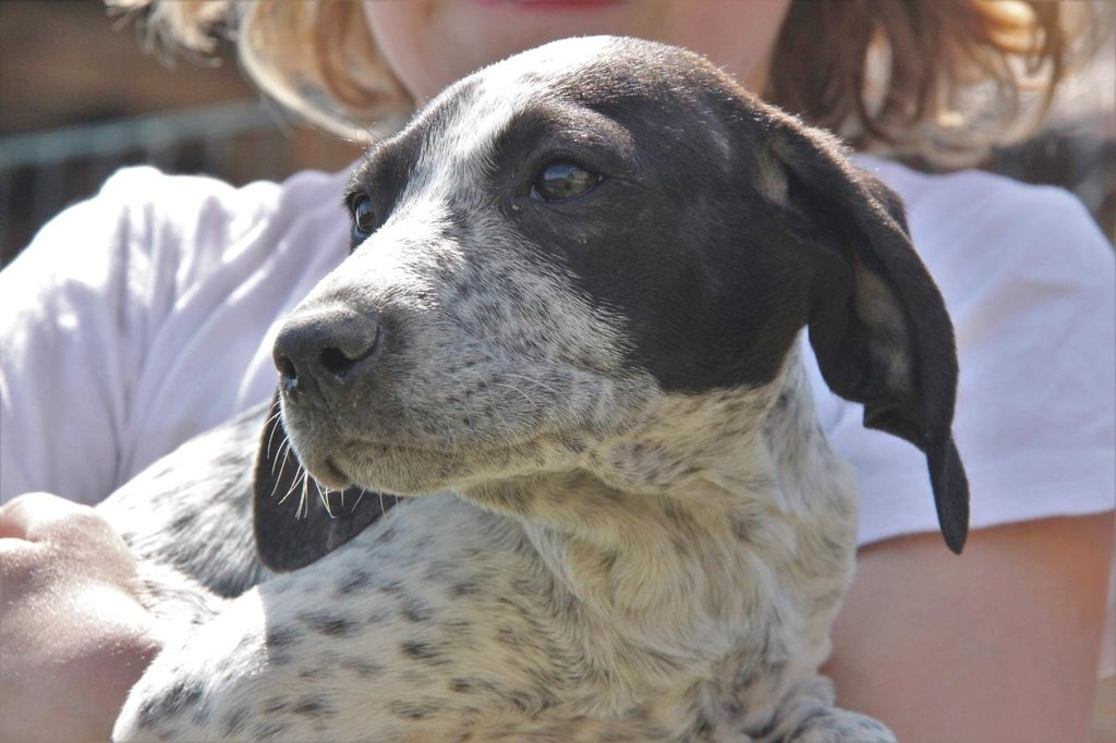 Bildertagebuch - ARIANNA, kleines Hundemädchen sucht Zuhause für immer... 36005221mb