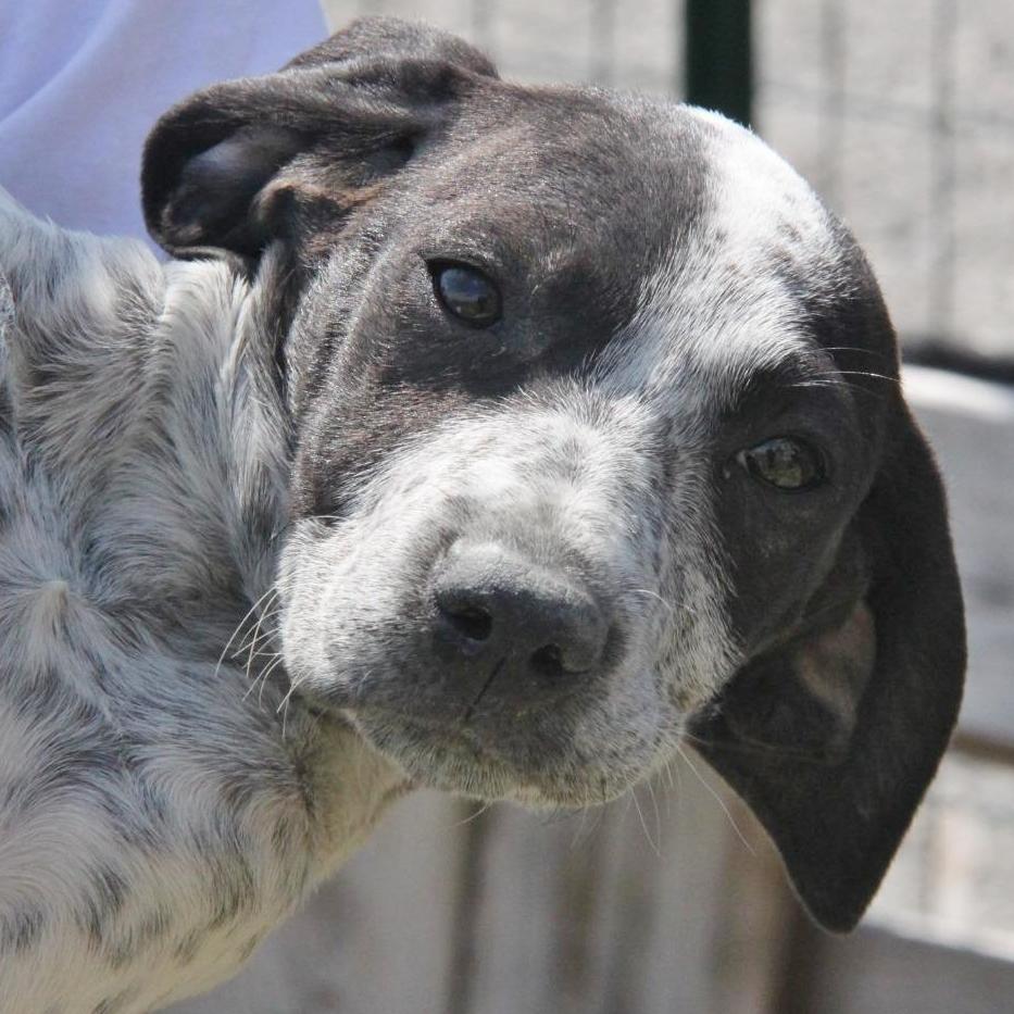Bildertagebuch - ARIANNA, kleines Hundemädchen sucht Zuhause für immer... 36005222lm