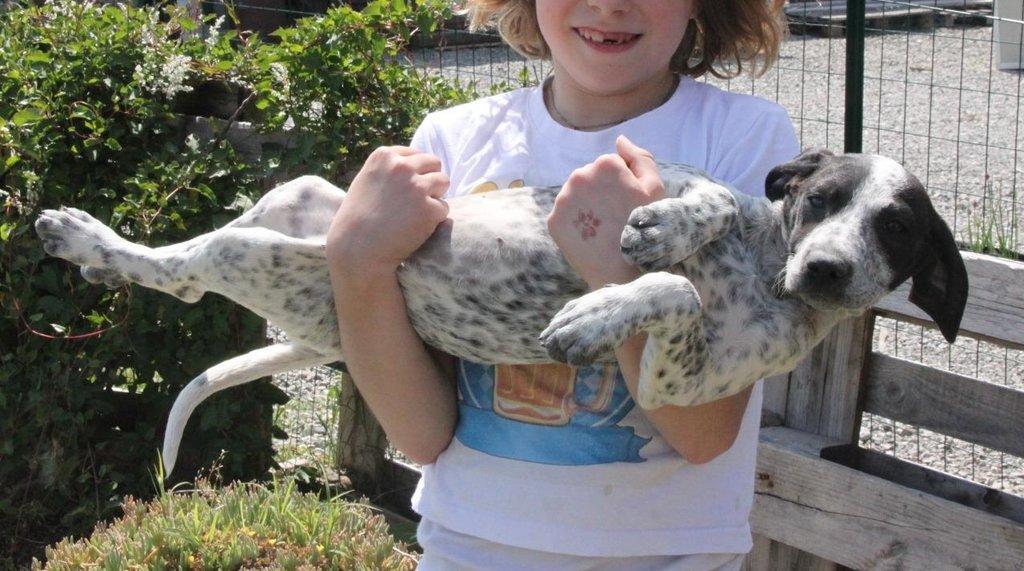 Bildertagebuch - ARIANNA, kleines Hundemädchen sucht Zuhause für immer... 36005223zx