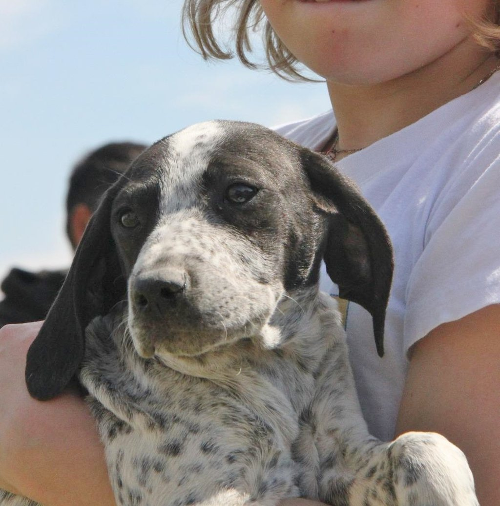 Bildertagebuch - ARIANNA, kleines Hundemädchen sucht Zuhause für immer... 36005226ow