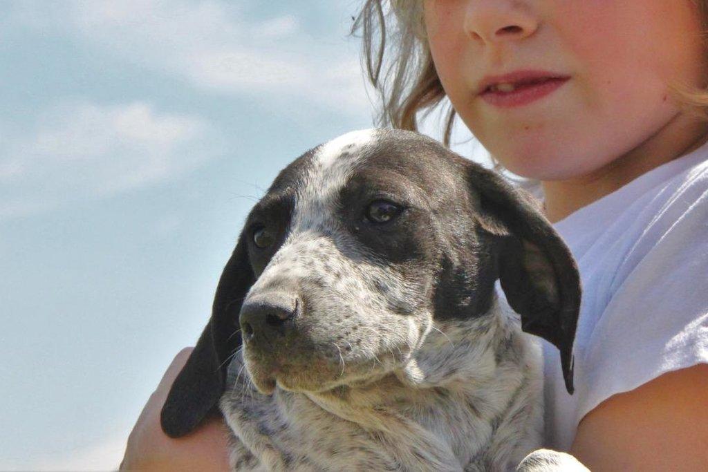 Bildertagebuch - ARIANNA, kleines Hundemädchen sucht Zuhause für immer... 36005228yr