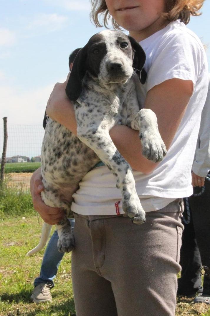 Bildertagebuch - ARIANNA, kleines Hundemädchen sucht Zuhause für immer... 36005229yg