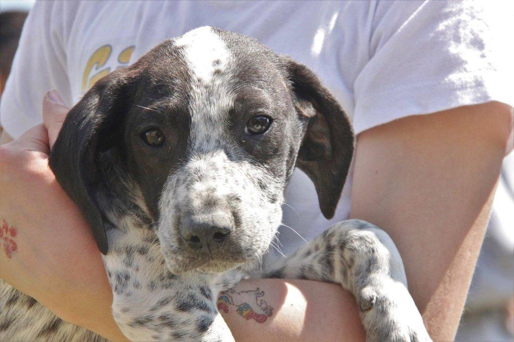 Bildertagebuch - ARIANNA, kleines Hundemädchen sucht Zuhause für immer... 36005230mj