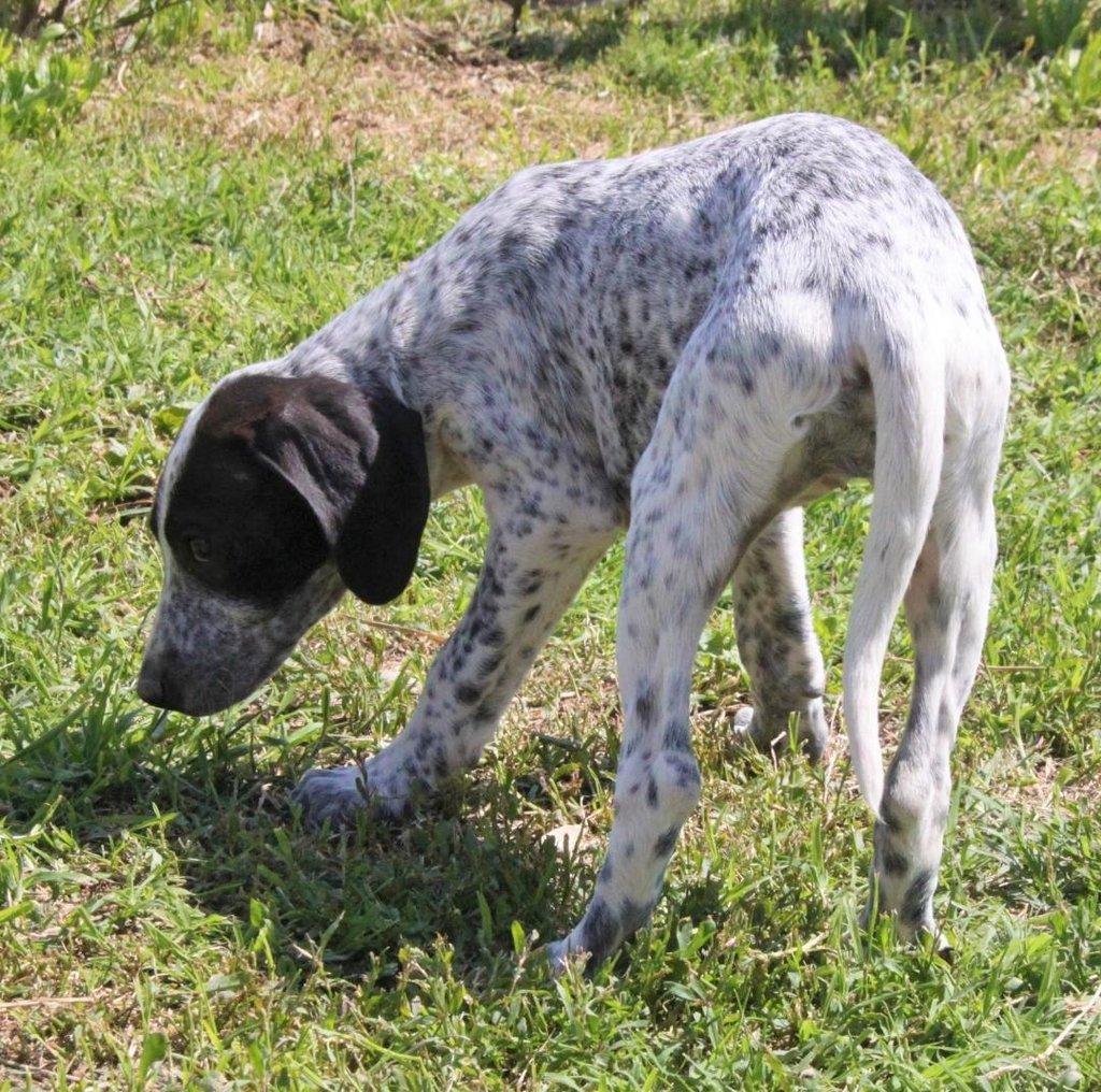 Bildertagebuch - ARIANNA, kleines Hundemädchen sucht Zuhause für immer... 36005232jq