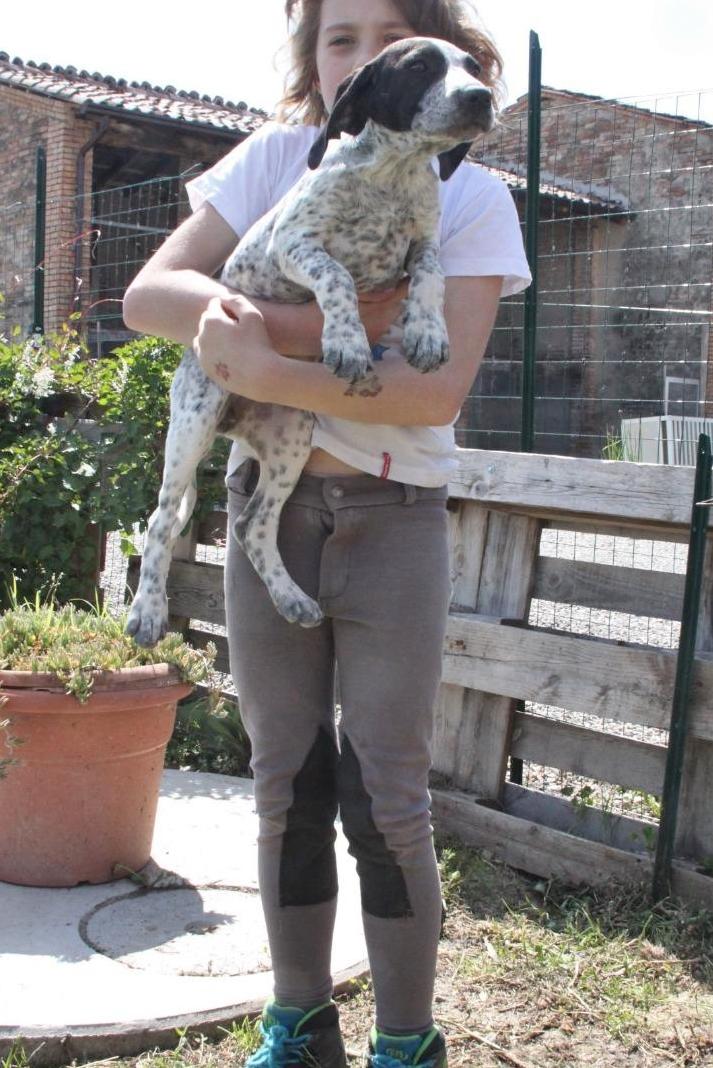 Bildertagebuch - ARIANNA, kleines Hundemädchen sucht Zuhause für immer... 36005233ja