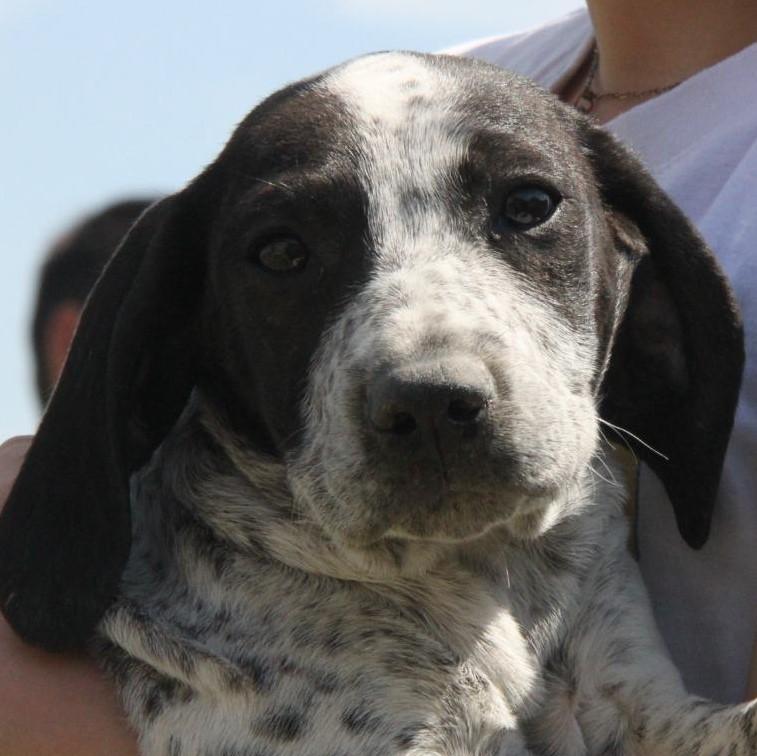 Bildertagebuch - ARIANNA, kleines Hundemädchen sucht Zuhause für immer... 36005237de