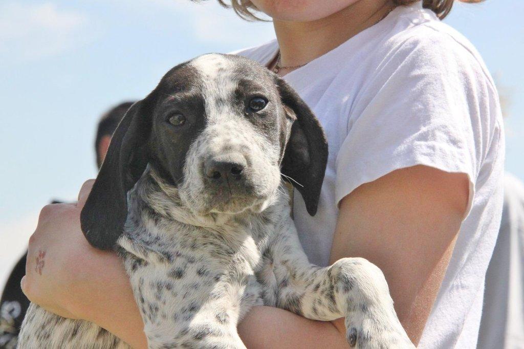 Bildertagebuch - ARIANNA, kleines Hundemädchen sucht Zuhause für immer... 36005238nx