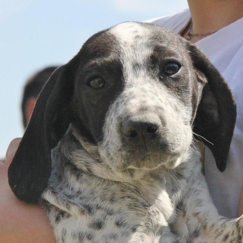 Bildertagebuch - ARIANNA, kleines Hundemädchen sucht Zuhause für immer - VERMITTELT - 36005246ux