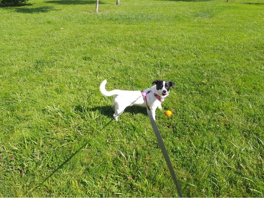 Bildertagebuch - TINA, fröhliche kleine Hundedame sucht ein neues Zuhause - ZUHAUSE in SPANIEN gefunden- 36110342vg